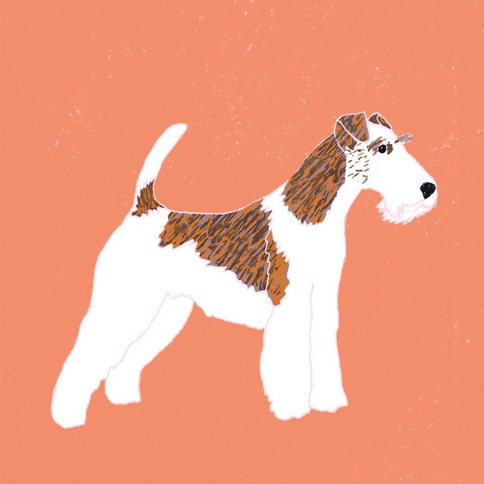 Dogs Milica-Golubovic-Fox-terrier-web