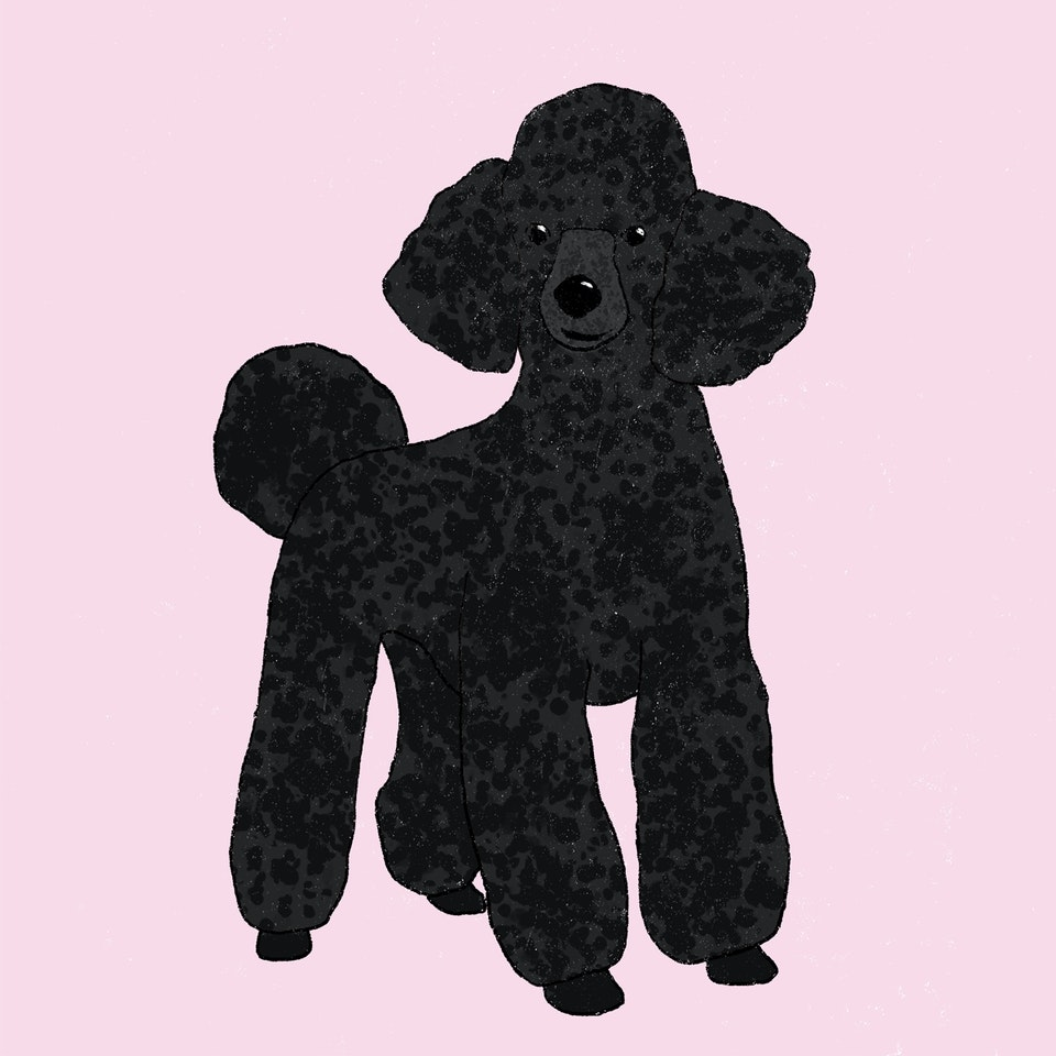 Dogs Milica-Golubovic-Poodle-web