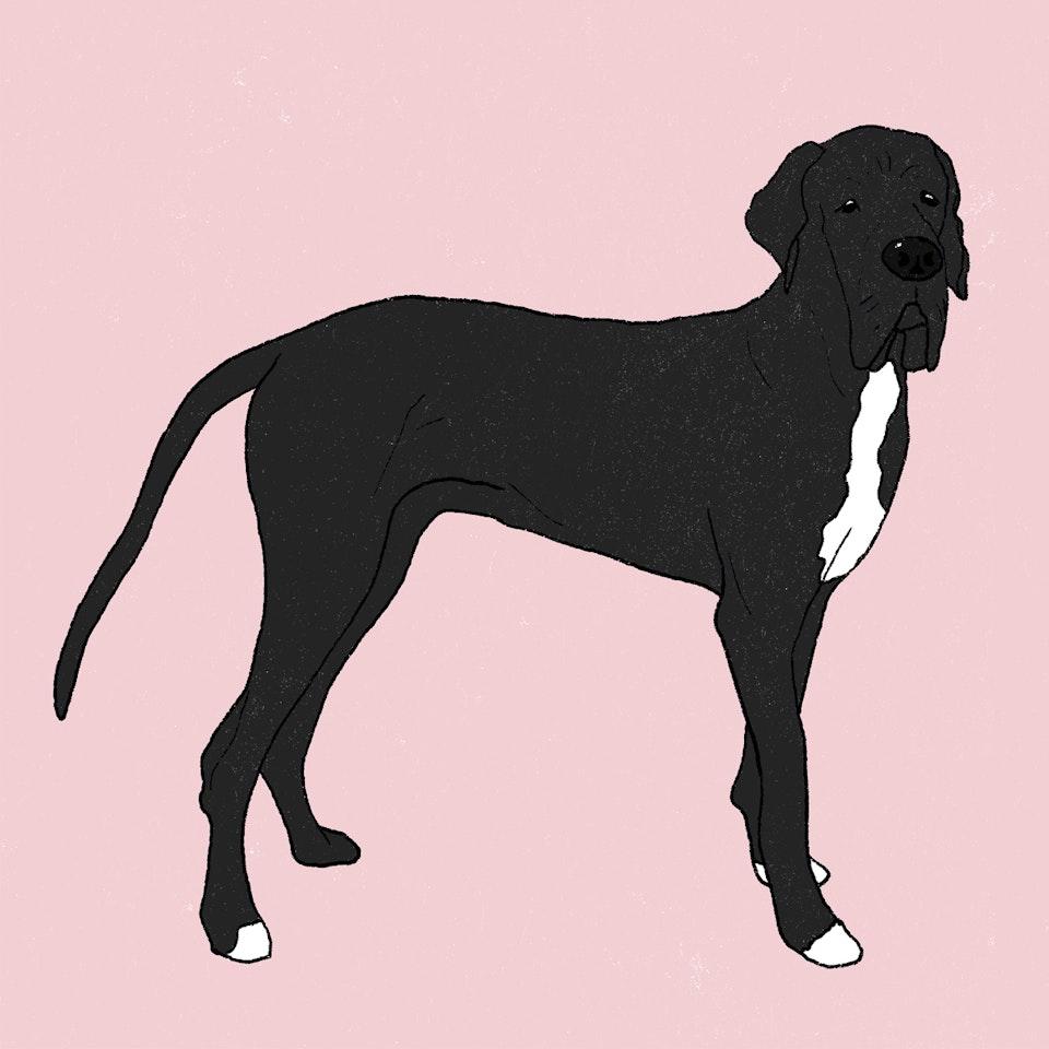 Dogs Milica-Golubovic-GreatDane-web