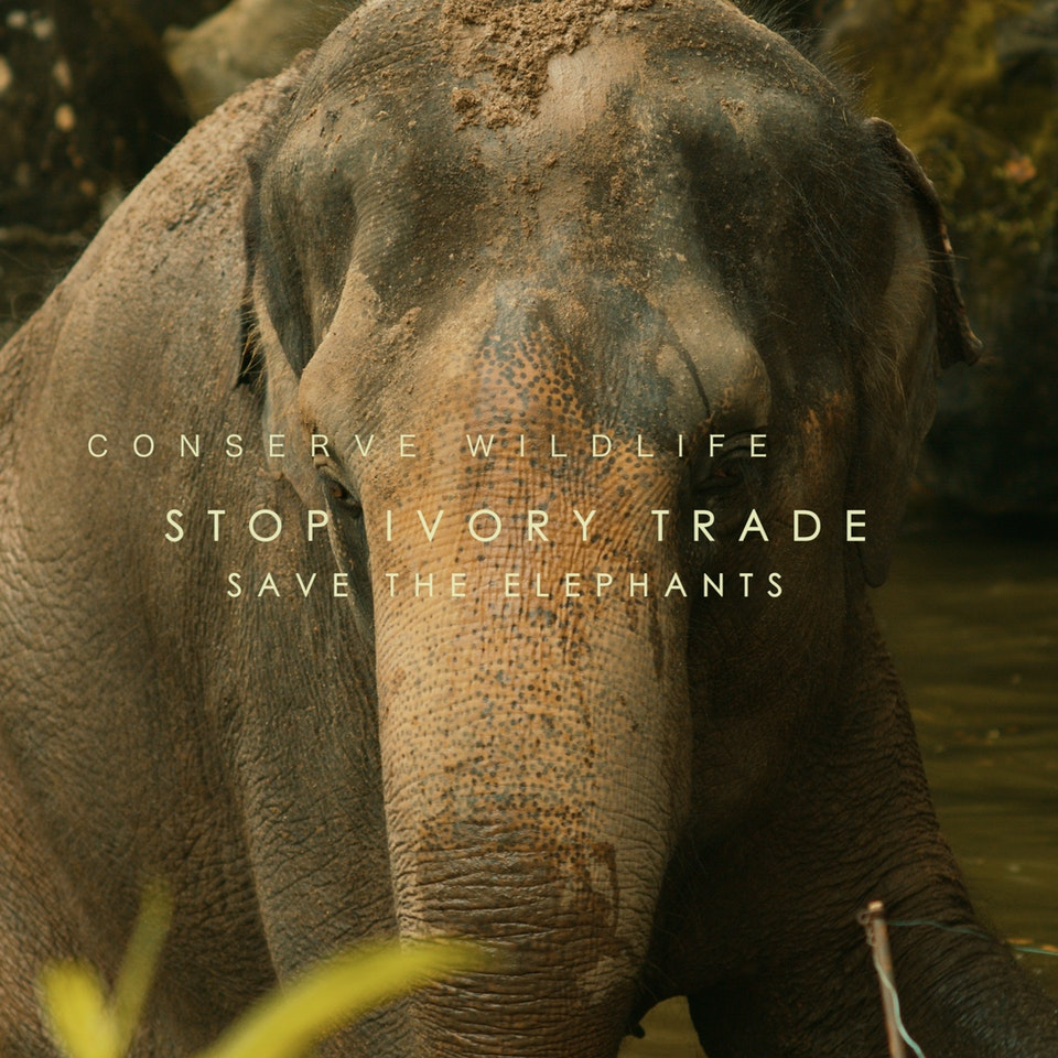 BRAVEN CINEMATOGRAPHY - WWF Commercial