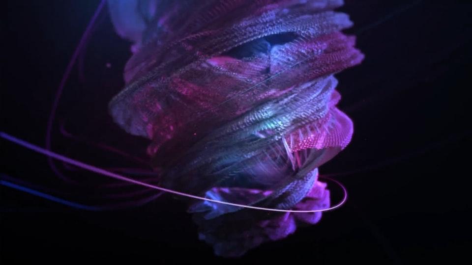Fernando Lazzari / Design and Direction - Nike Free Run with Future Deluxe