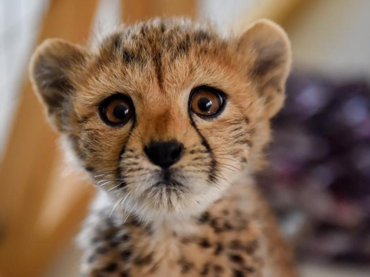 """""""Cheetahs for Change"""" - Our Young Global Citizens Series - Charles P. Allen High School"""
