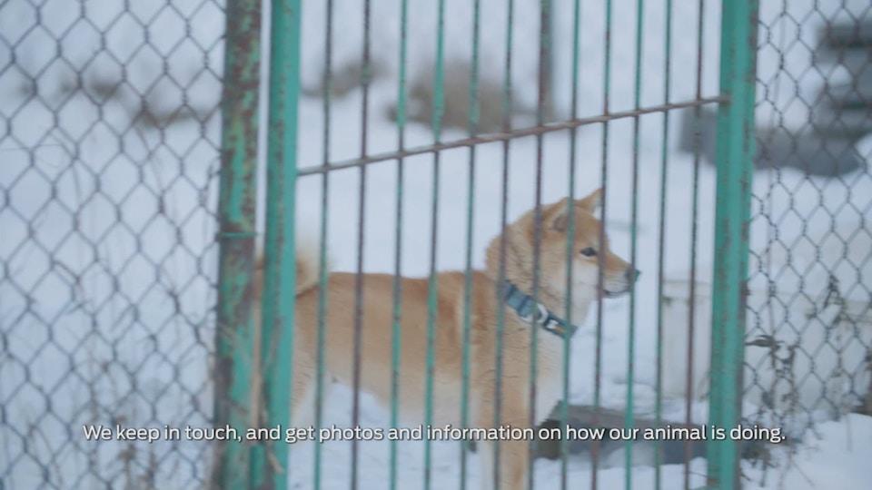 Purina - 'Pet Adpotion'