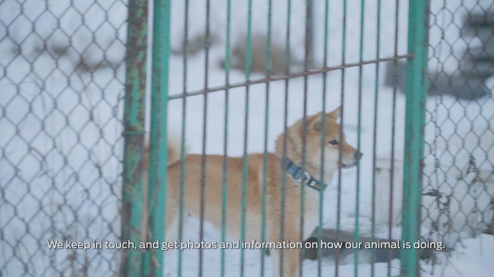 Purina - 'Pet Adpotion' - Brand Documentary