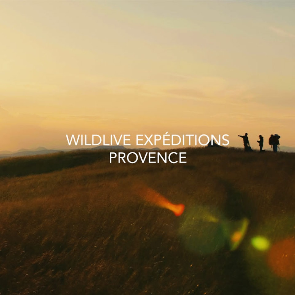 jmage - BANDE ANNONCE WILDLIVE EXPEDITIONS PROVENCE