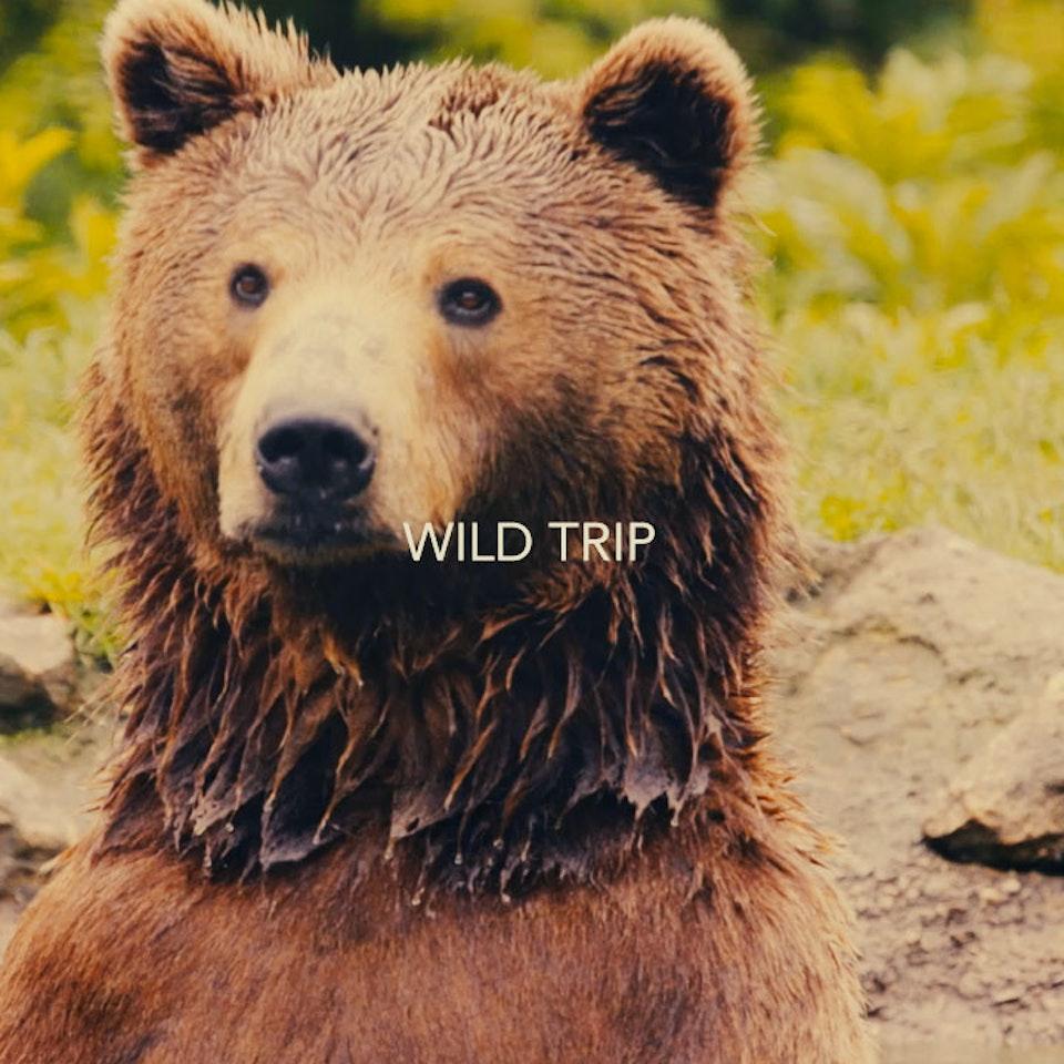 jmage - WILD TRIP - PROMO TRAILER