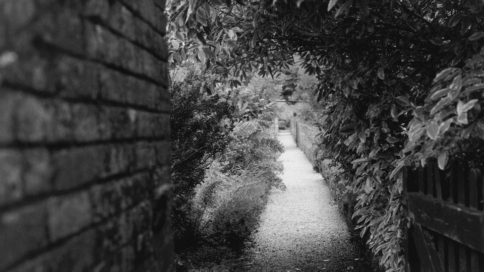 Barbara Santi - Home of Springs, Trengwainton