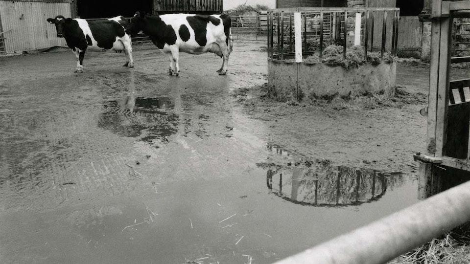 Farming Families 1135cleanedup
