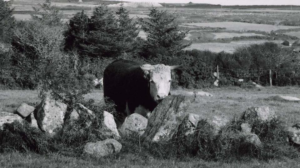 Farming Families 1146