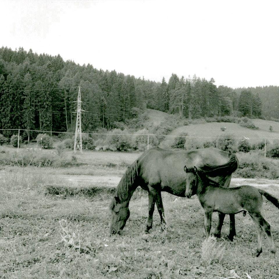 Romania img038