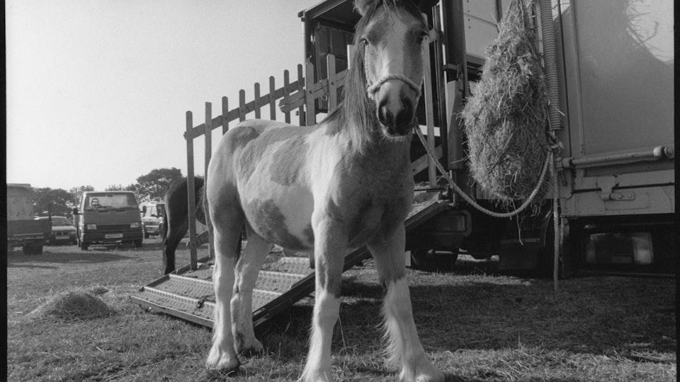 Stow Fair horse