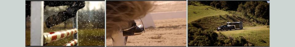Ram - Equestrian