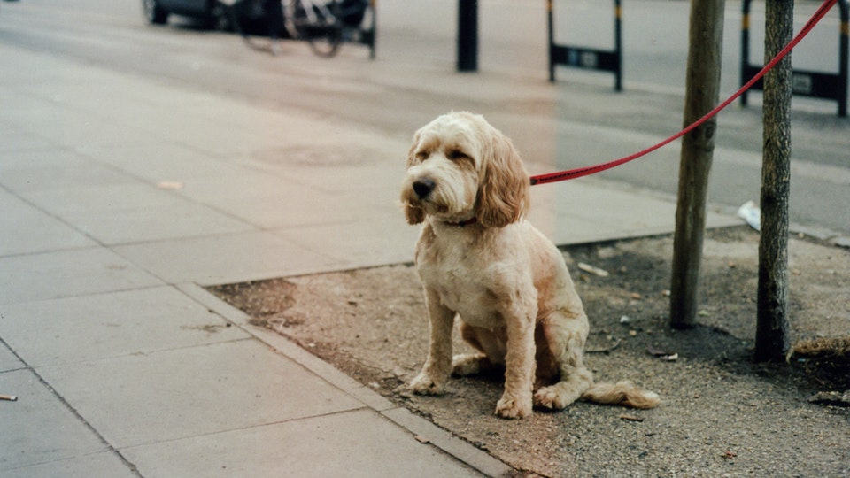 Dogs Without Their Owners