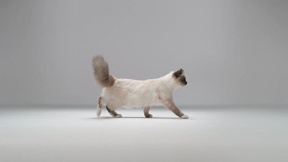 Royal Canin - Kittenhood
