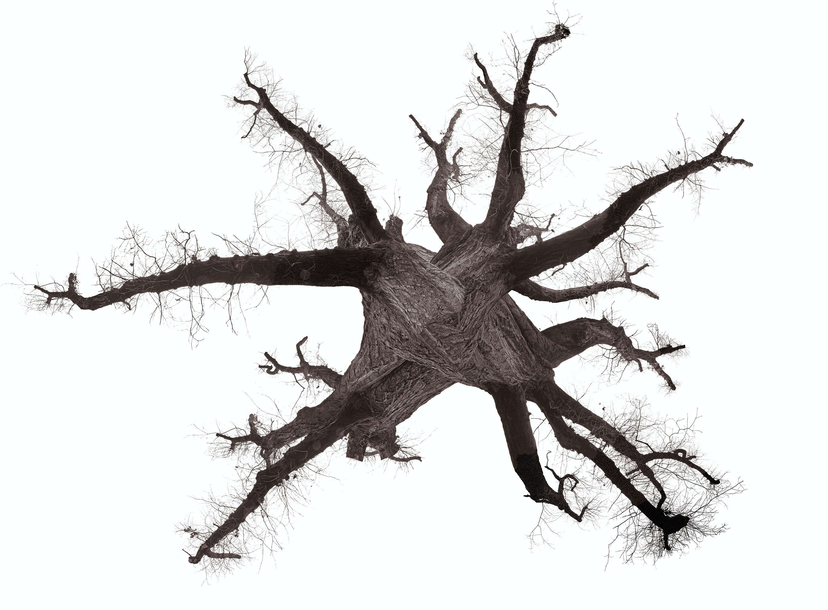 Michael Loos - tree_360_compositeWARM