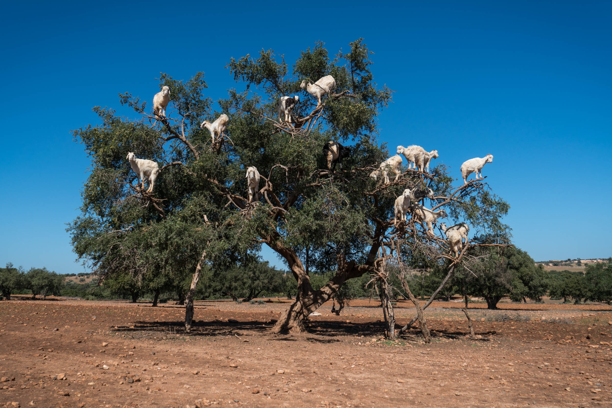 Michael Loos - Route_Goats0441