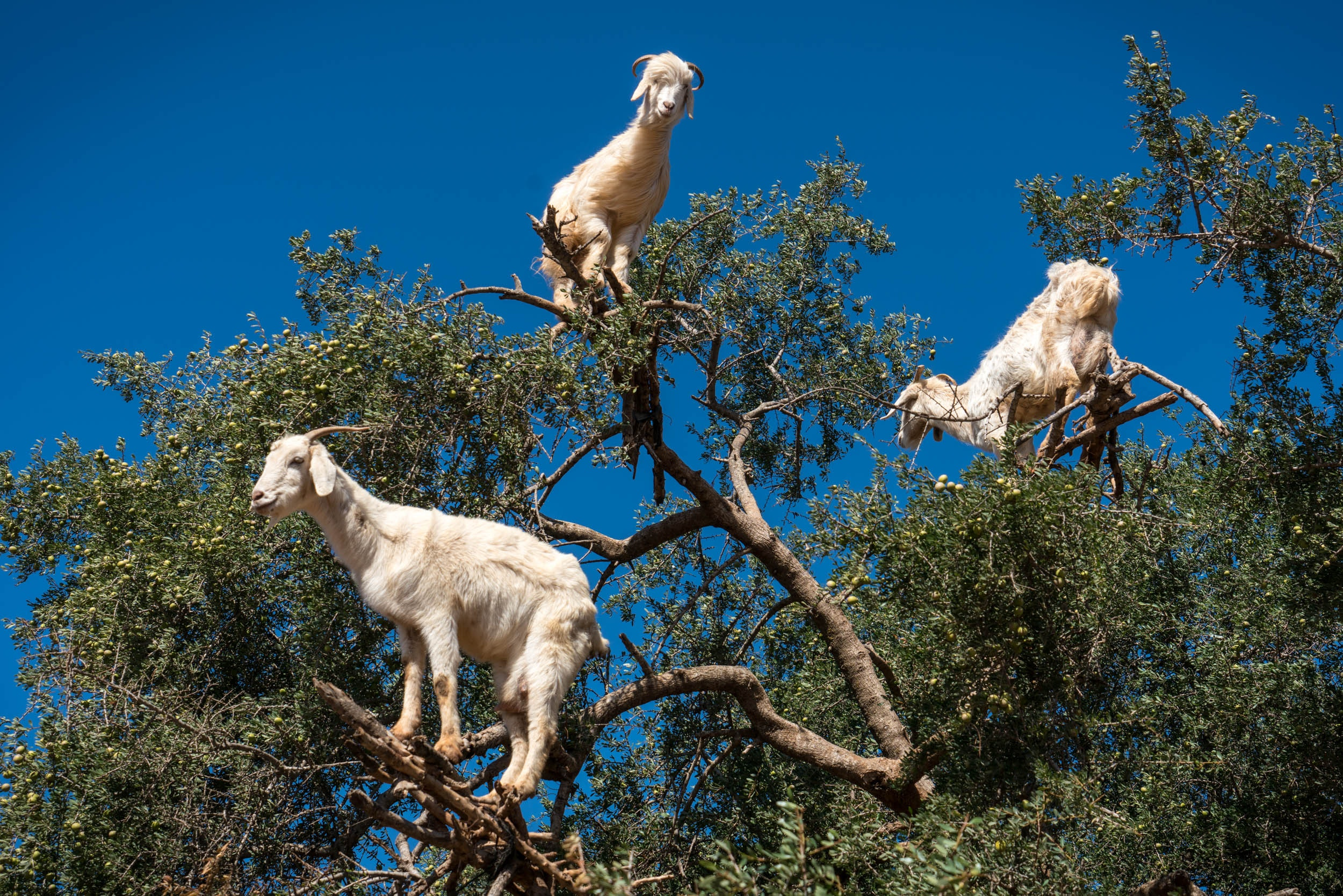 Michael Loos - Route_Goats0443