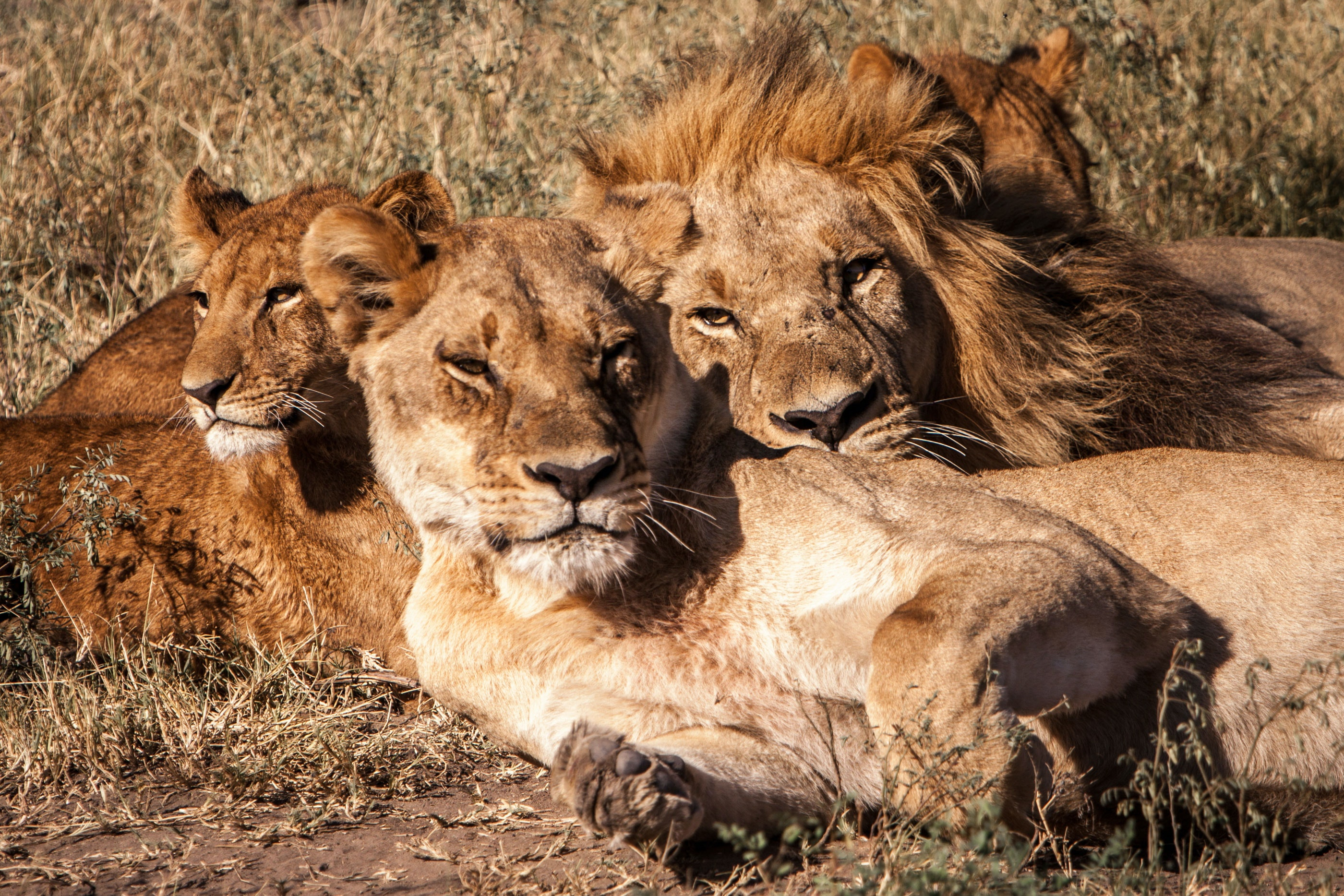 Michael Loos - Botswana2016-4469