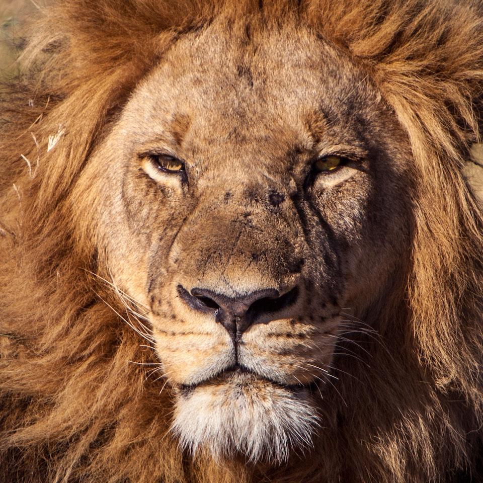 Michael Loos - Botswana Safari - Photo Story