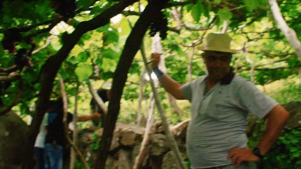 VINAGRE GALLO MADEIRA - MAKING OF