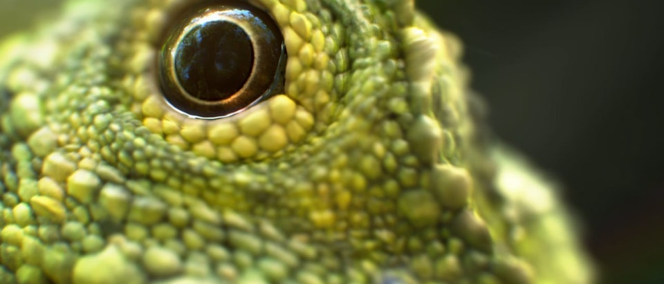 Sky UHD - Lizard - Sky: Macro moments – documentaries