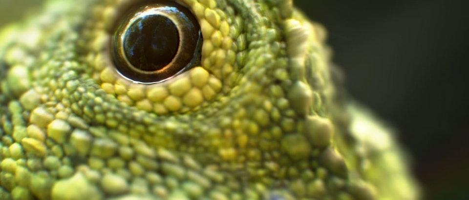 Sky UHD - Lizard Sky: Macro moments – documentaries