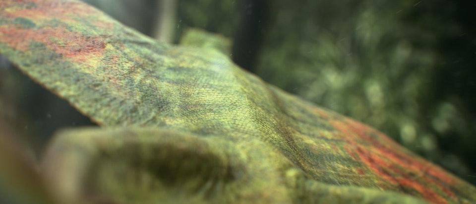Sky UHD - Lizard Lizard_02
