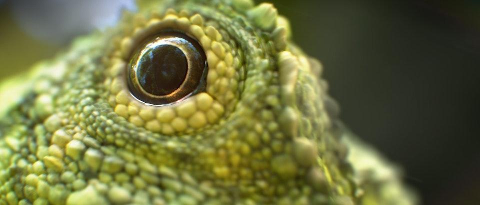 Neon - Sky UHD - Lizard