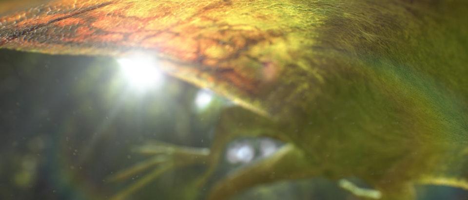 Sky UHD - Lizard Lizard_03
