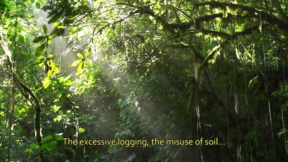 Agua en el Bosque Nublado
