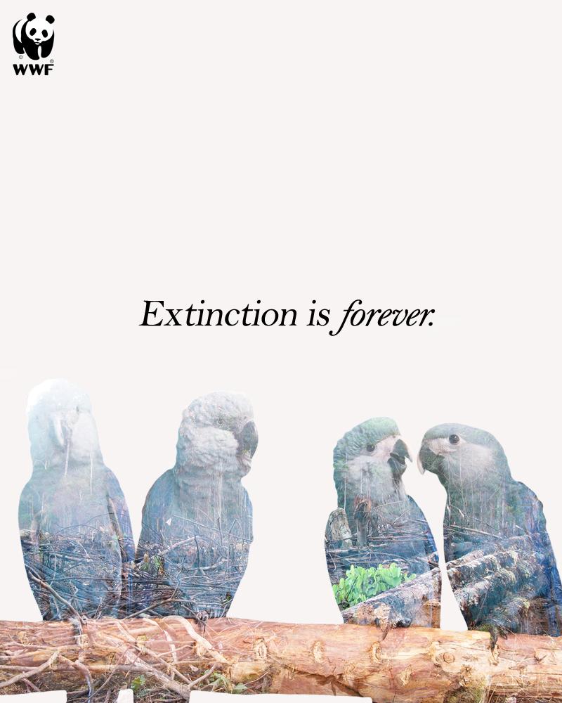 DE-Spixy-Macaw