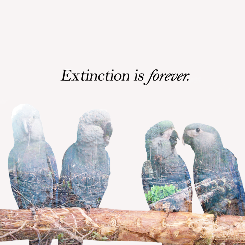 Extinction is Forever.