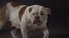 'Backstreet Breading'-Battersea Dogs Home
