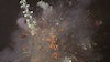 Ori Gersht trailer for 'Big Bang'