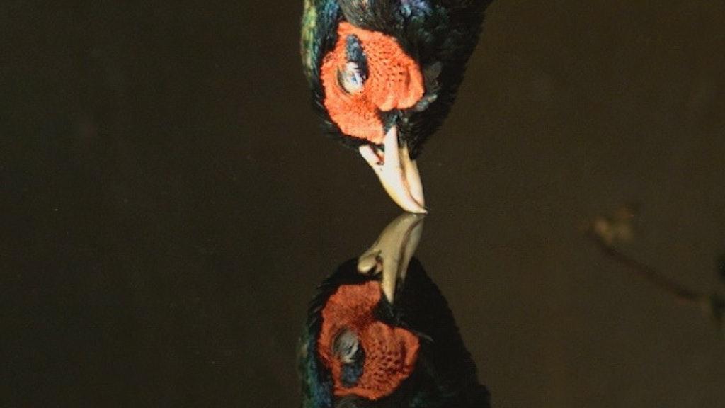 'Falling Bird'  Ori Gersht
