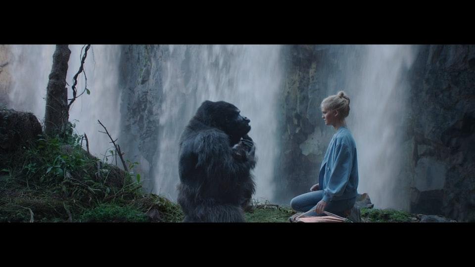 Julien Alary - com hem - gorilla - Filip Tellander