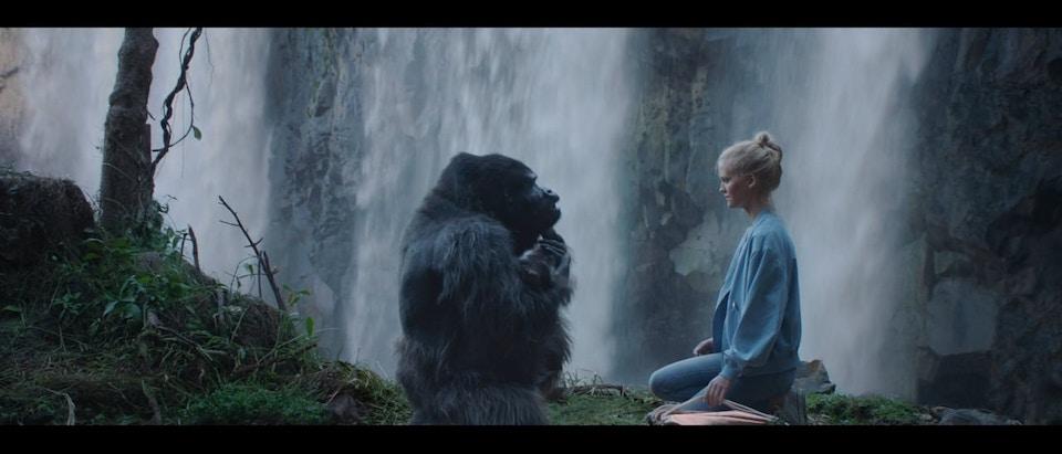com hem - gorilla - Filip Tellander
