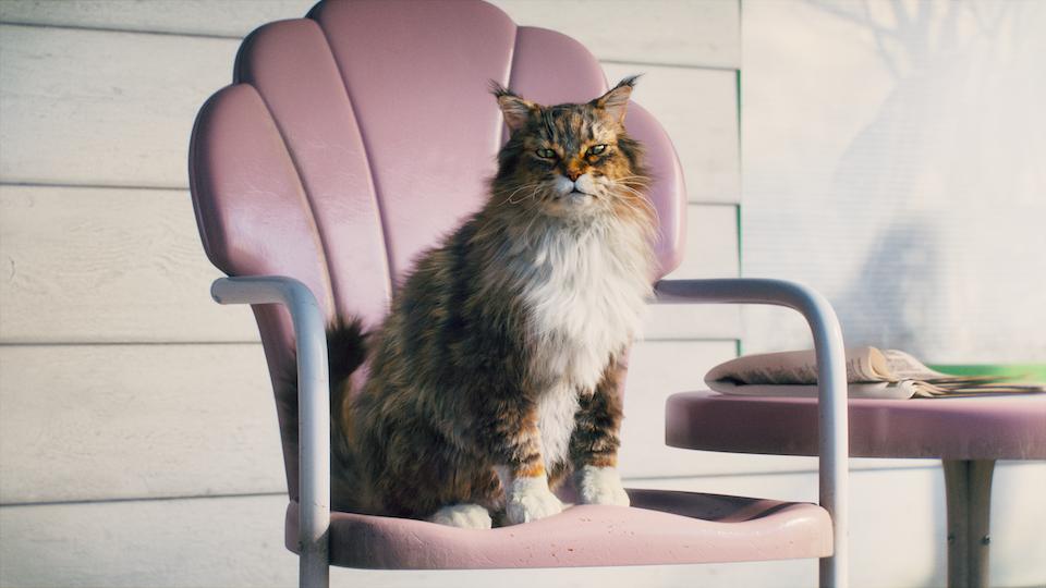 Cat's Pride - Cat's Pride - Bobby