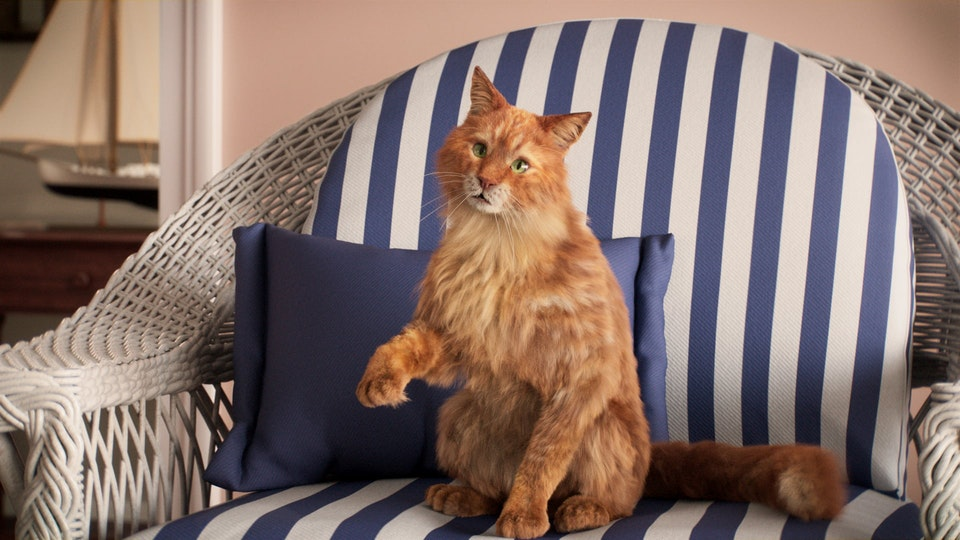 Cat's Pride » O'Malley - Cat's Pride - O'Malley