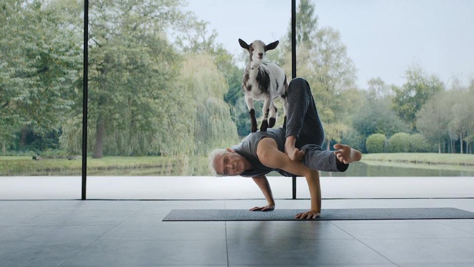 WBAC - Goat Yoga