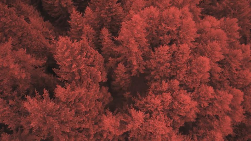 johnnie walker | red rye -