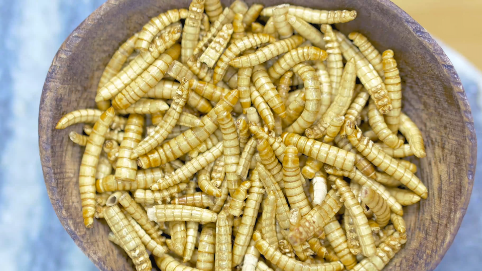 JZ PRODUCTIONS - Wraps Recipe with Mealworms, for Oh My Bug