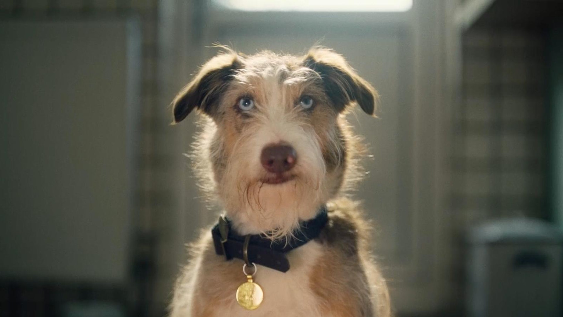 Dogs Trust 'Underwear Ever After'