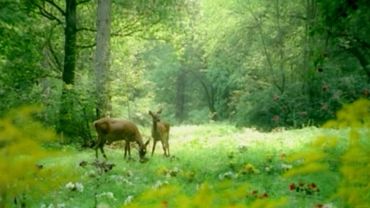 OLW - Adam & no Eve