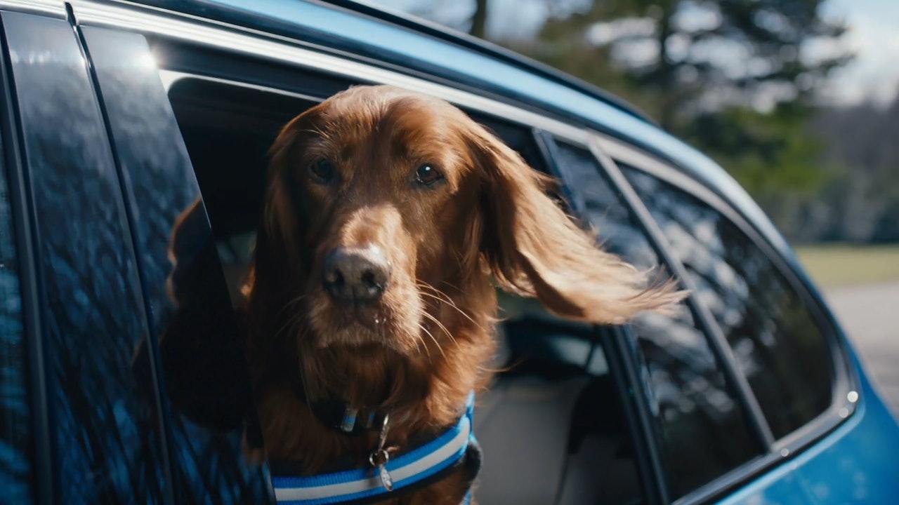 BMW - dDrive