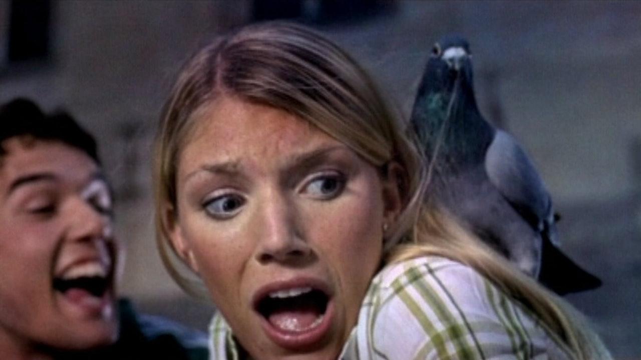 Eastpak - The Birds