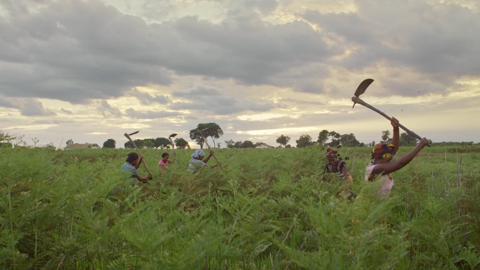 UNITED NATIONS IFAD - The Field Report