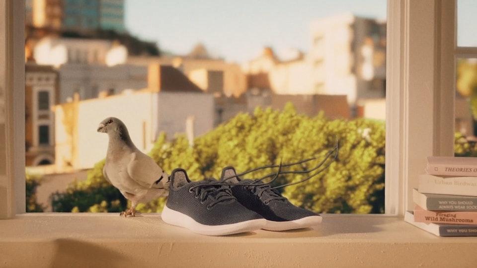 Allbirds / Treerunner