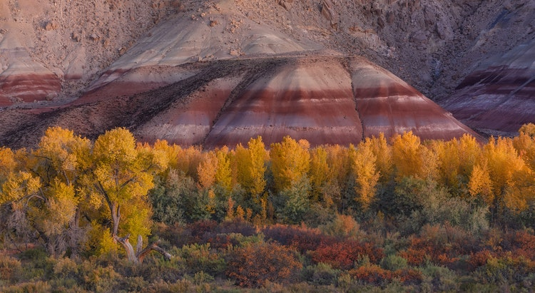 True-Colors-of-the-Desert-sm