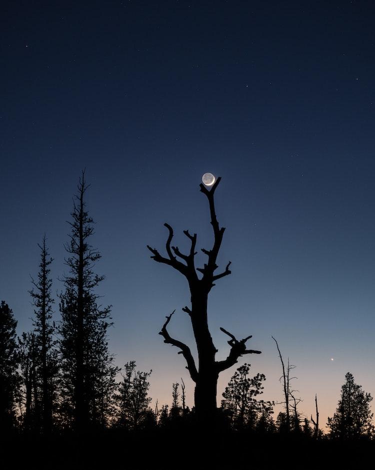 Moon-Tree-IV